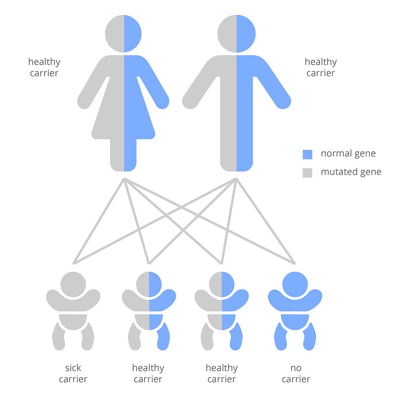 Carriers schema