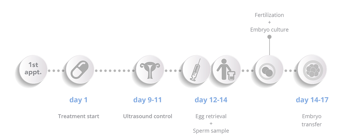 In vitro fertilisation - Schema