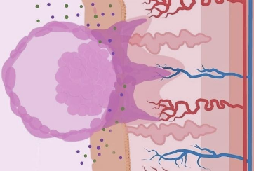 Embryonic-implantation-Girexx-3
